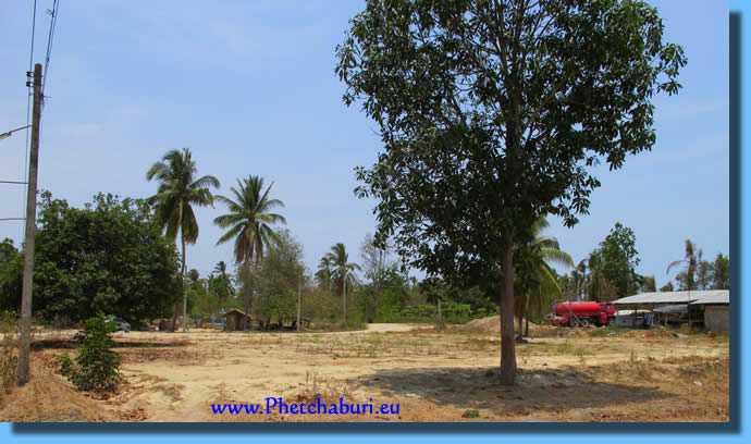 Coconut and Mango trees on the plot